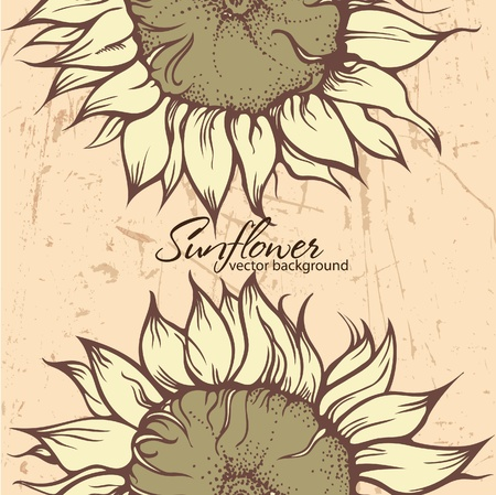 Textured background with Sunflowers