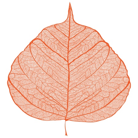 Orange leaf skeleton on black background Illustration