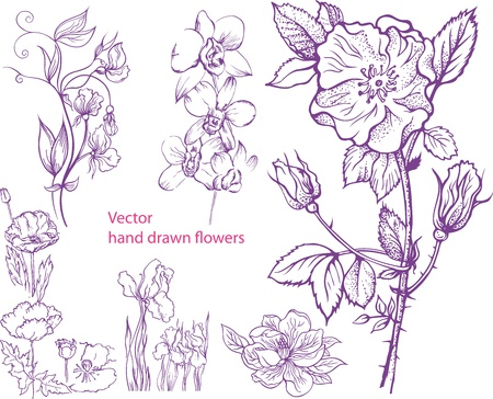 plant hand: Set of hand drawn rose, magnolia, poppy, irises and orchid