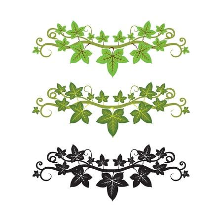キヅタの植物のパターン illlusstration