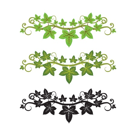 pattern illlusstration of ivy plant