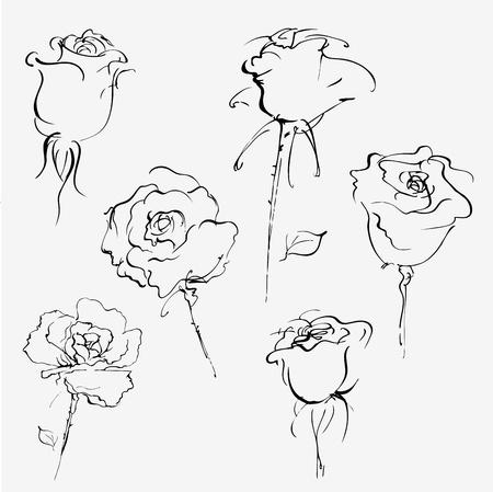 흰색에 장미 꽃 봉오리의 손으로 그린 벡터 스케치