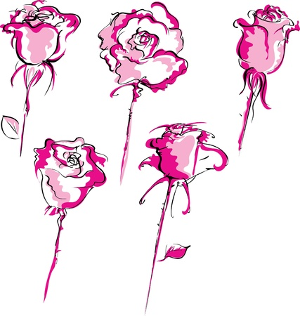 Sketch of hand drawn pink roses