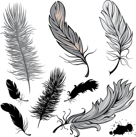 Set of  illustration feathers Vector