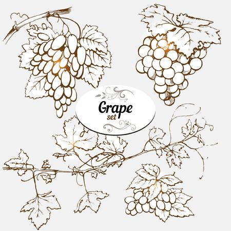 hojas parra: Conjunto de dibujos de uva Vectores