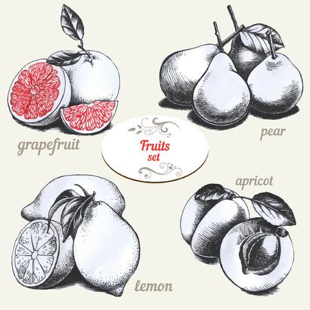 Set van tekeningen vruchten Stock Illustratie