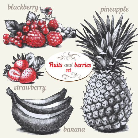 pineapple juice: Set of drawings fruits and berries Illustration