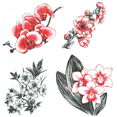 tiger lily: Set of hand drawn flowers orchids