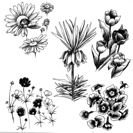 tiger lily: Set of hand drawn flowers lily, tiger lily, calla lilies, daffodils