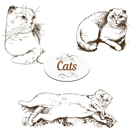lop: Set of drawings Briton lop-eared cat Illustration
