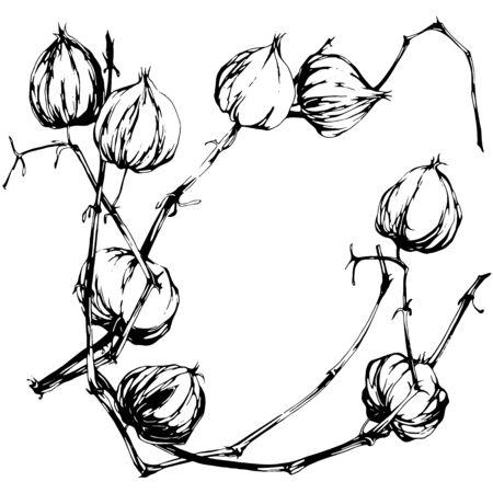 exotic flowers: Physalis  illustration