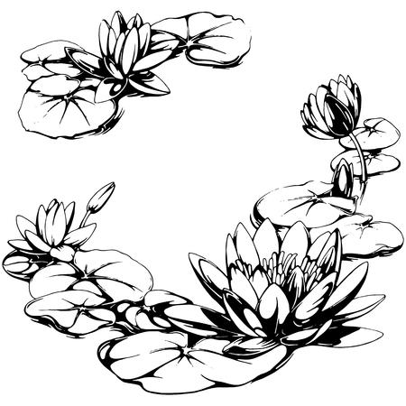 Ilustración del lirio de agua Ilustración de vector