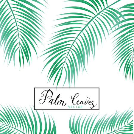 philodendron: Palm Leaves