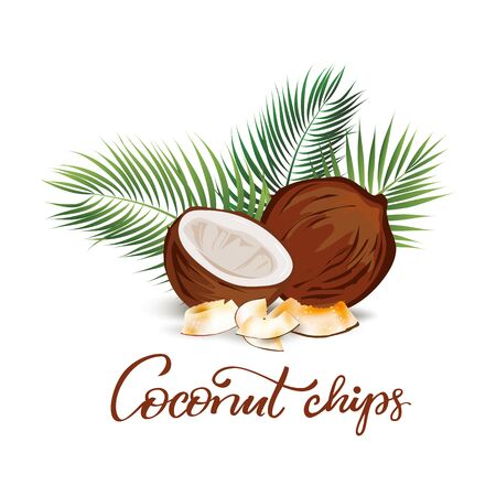 Coconut and palm leaves  illustration