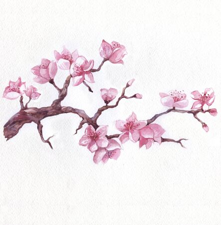Flowering sakura branch, watercolor hand drawn illustration