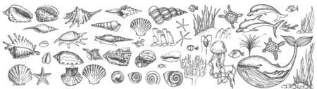 Big set of shells and sea animals, collection of drawings and sketches