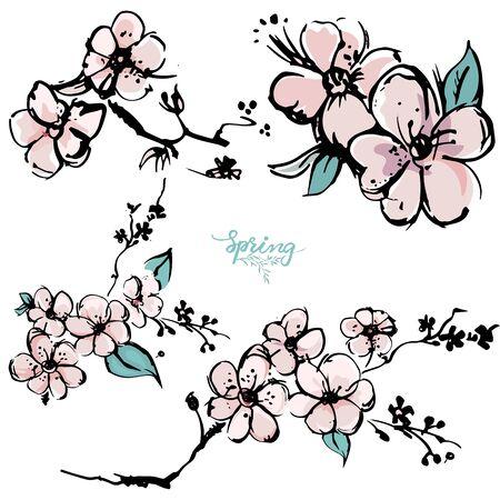 Springtime apricot blossom hand drawn sketch