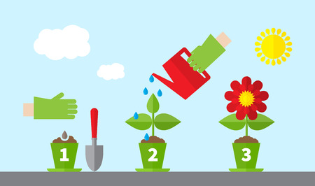 Infographic stages of plant growth. Growing concept. Flat design, vector illustration. Illustration