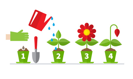 Infographic four stages of plant growth. Growing concept. Flat design, vector illustration.