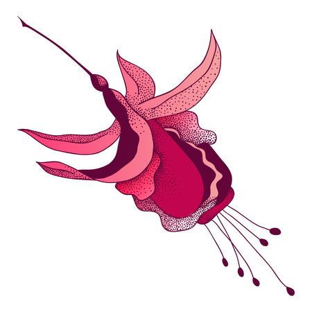 Vector graphic illustration of fuchsia flower in color