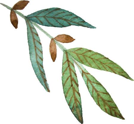 bunch: Leaf bunch
