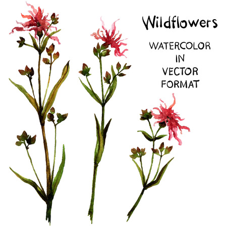 Wild flowers. Watercolor hand painting in vector format.