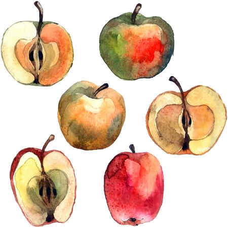 Apples. Watercolor hand painted illustration apples. Vector format. Illusztráció