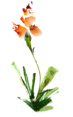 Iris. Waterverf en inkt illustratie in stijl sumi-e, u-zonde. Oosterse traditionele schilderkunst. Stockfoto