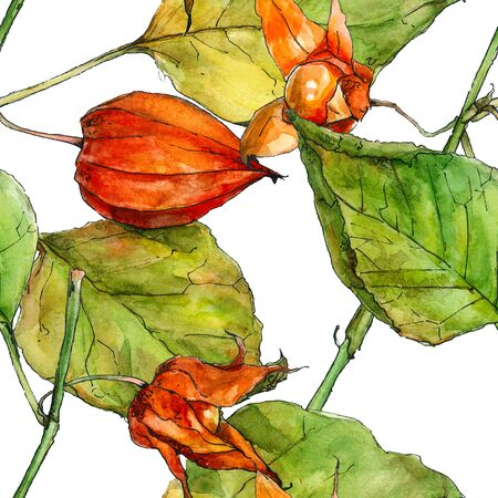 phisalis: Fisalis. Watercolor realistic illustration. Seamless pattern.