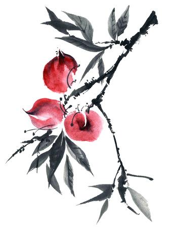 gohua: Watercolor and ink illustration of peach tree. Gohua, sumi-e, u-sin painting.