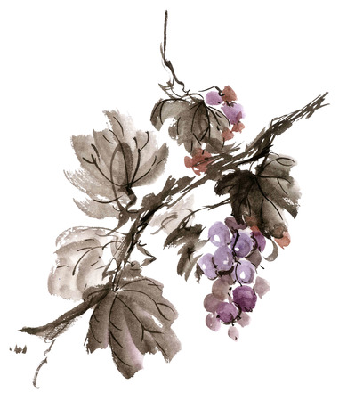 gohua: Watercolor and ink illustration of  grapevine. Gohua, sumi-e, u-sin painting.