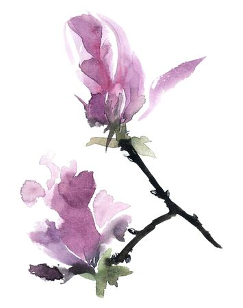magnolia tree: Watercolor and ink illustration of flowers of magnolia tree