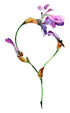 iris flower: Watercolor illustration of iris flower with heart. Decorative greeting card.