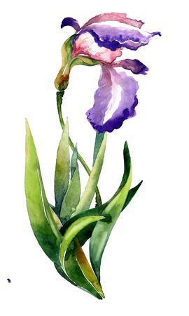iris flower: Watercolor illustration of iris flower. Decorative greeting card.