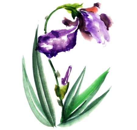 gohua: Watercolor and ink illustration of blossom iris flower. Gohua, sumi-e, u-sin painting.