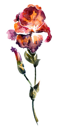 ink illustration: Flower. Watercolor and ink painting. Botanical illustration. Stock Photo