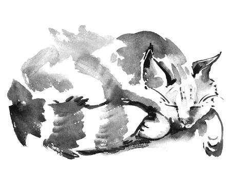Aquarel portret van slapende kat. getrokken schilderen met de hand. Stockfoto