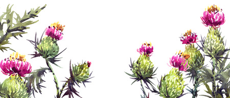Watercolor painted thistle flowers. Blossom meadow plants. Hand drawn botanical illustration. Artistic background.