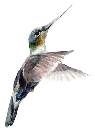 Watercolor paintied flying hummingbird. Hand drawn artistic illustration.