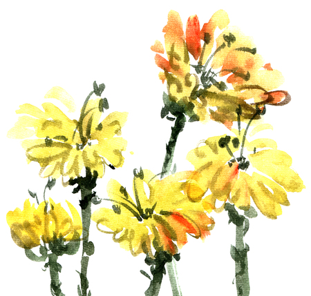 Watercolor painted marigolds flowers on white background