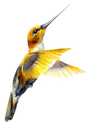 Watercolor flying hummingbird