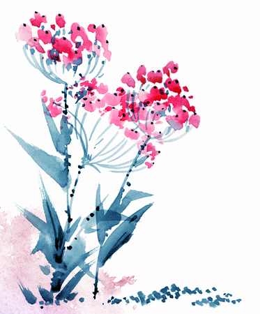 Watercolor painted flowers, blossom meadow umbelliferous plant, hand drawn botanical illustration Stockfoto
