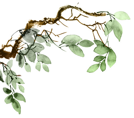 Watercolor and ink illustration of tree branch with leaves. Oriental traditional painting in style sumi-e and u-sin. Artistic illustration. Banco de Imagens - 120937896