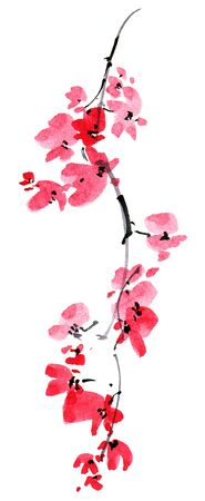Watercolor and ink illustration of blossom sakura tree branch. Sumi-e, u-sin oriental traditional painting.