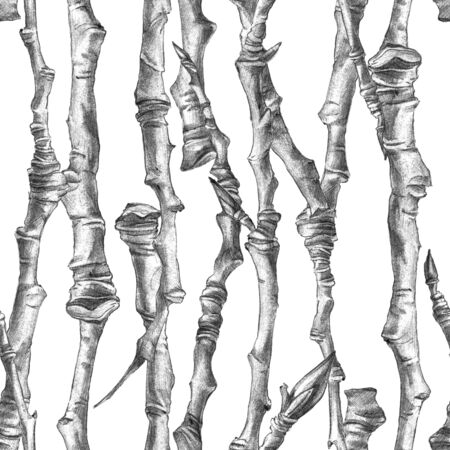 Botanical sketch of poplar branches without leaves. Drawing by ballpoint pen. Seamless pattern.