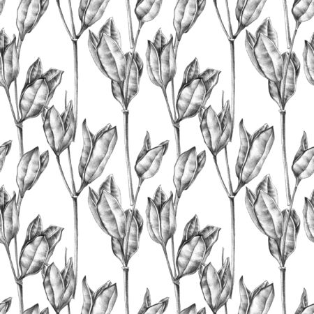 Botanical sketch of wilted flowers herbarium. Drawing by ballpoint pen. Seamless pattern.