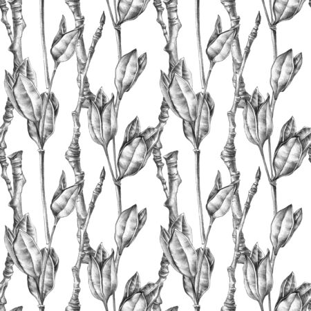 Botanical sketch of wilted flowers herbarium and poplar branches. Drawing by ballpoint pen. Seamless pattern.