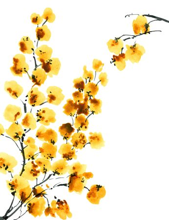 Watercolor and ink illustration of mimosa flowers. Oriental traditional painting in style sumi-e, u-sin and gohua. Stock Photo
