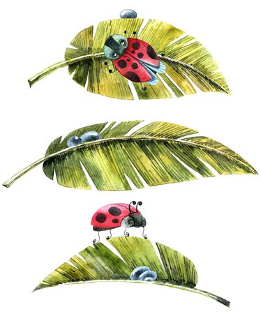 Watercolor illustration of leaves, ladybug and waterdrops. Artistic spring set. Stockfoto