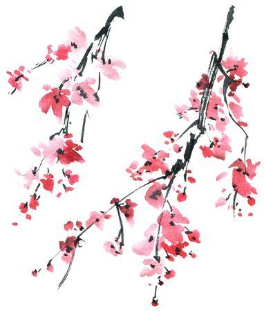 Aquarell- und Tintenillustration des blühenden Kirschblüte-Baumes mit rosa Blumen auf weißem Hintergrund. Orientalische traditionelle Malerei im Stil Sumi-e, u-sin.